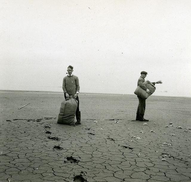 Noordoostpolder. Uitzaai van zeeaster in de polder. Bron: Fotocollectie Nieuw Land. Directie Wieringermeer, Kampen.