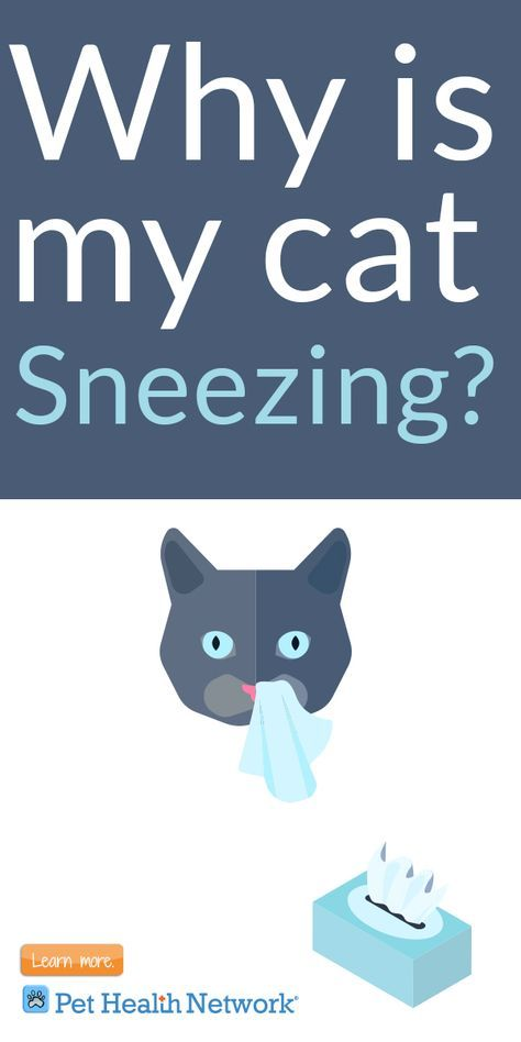Why is my #cat #sneezing by @drjustinelee   #pethealthnetwork