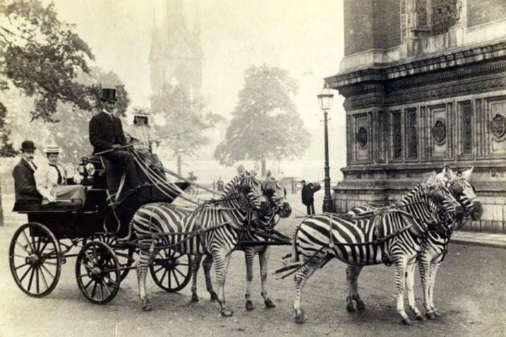 Chp zamaninda Zebralar At diye kullanilirken (1939 Beyoglu) #ArşivOdası