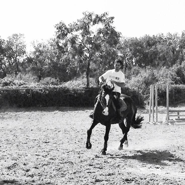 Caesar jumping horse - Holstein Horses
