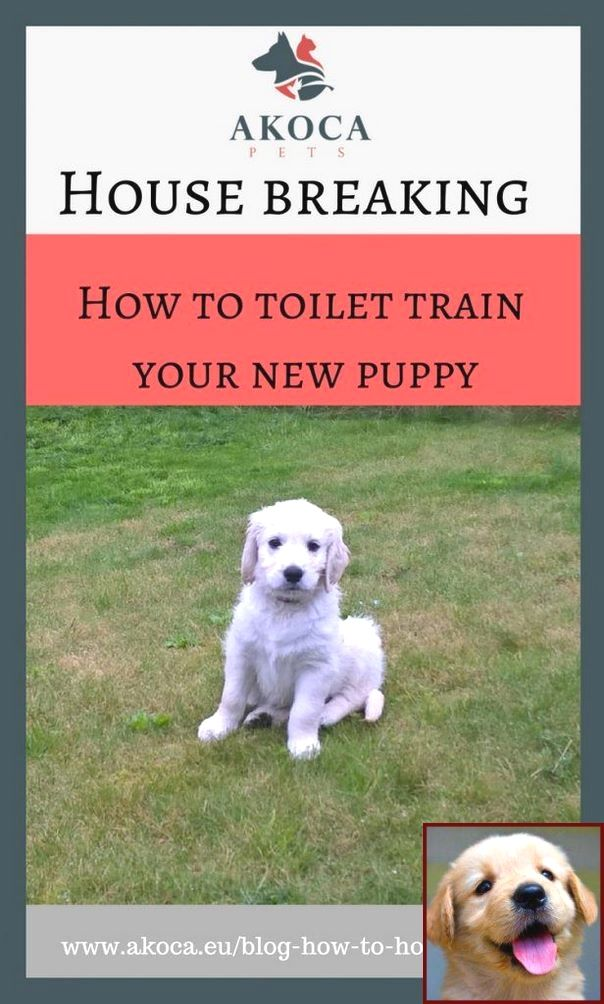 House Training A Puppy At Night And Clicker Dog Training Commands