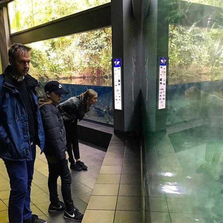 Who's looking at who  #aquarium #aquariumberlin #berlin #danishadventurer
