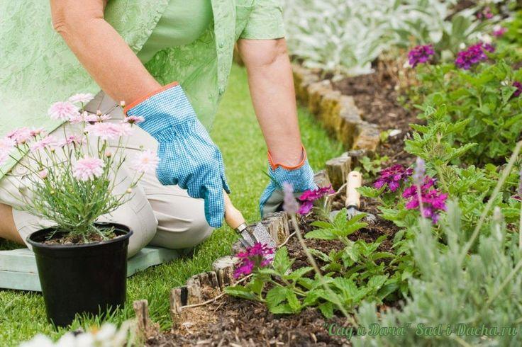 http://sad-i-dacha.ru/ Благоприятные посадочные дни в мае Сохраните себе, чтобы не потерять!  1 мая - можно сажать цветы, сеять укроп и злаки. В этот день хорошо внести минеральные удобрения. 2 мая - делите и пересаживают многолетники, пикируют посевы. 3 мая - благоприятный день для посева капусты и ленточных. Хорош день и для посадки косточковых деревьев. 4 мая - можно сажать все виды цветов и лекарственных трав. 5 мая - делайте минеральные подкормки, поливайте дождеванием. 6 мая…