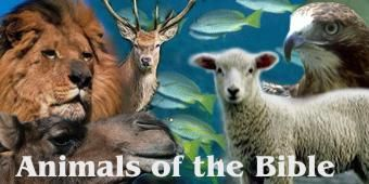 Animals of the Bible 138 animals and related terms