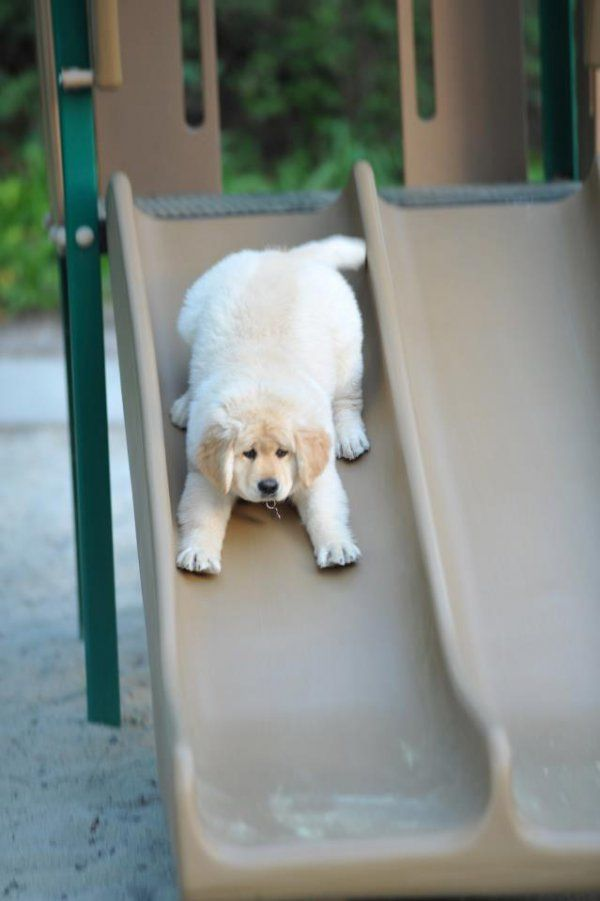 13 Dogs On Slides That Are Way Cuter Than Dumb Babies