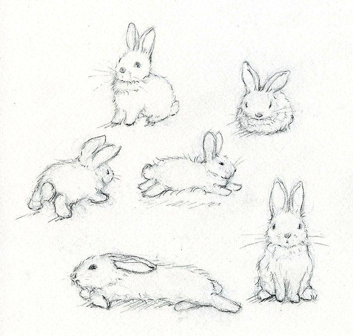 how to draw rabbits realistic – Recherche Google
