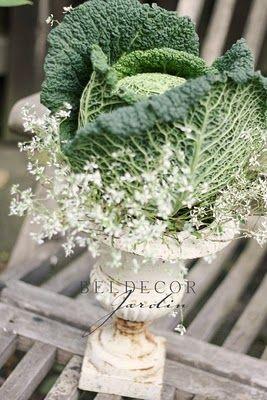 cabbage in urn