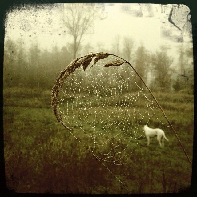 A hauntingly beautiful photo perfect timing for halloween! #LangleyFresh