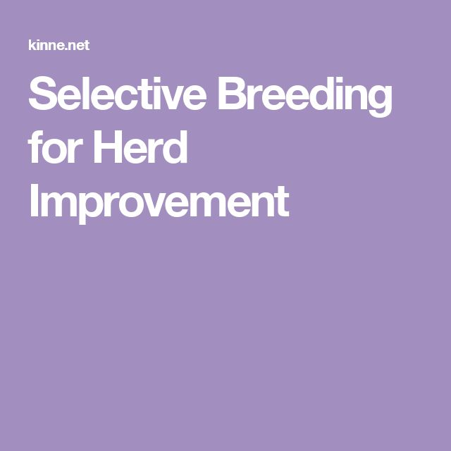 Selective Breeding for Herd Improvement