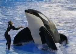 I want to become a whale trainer?