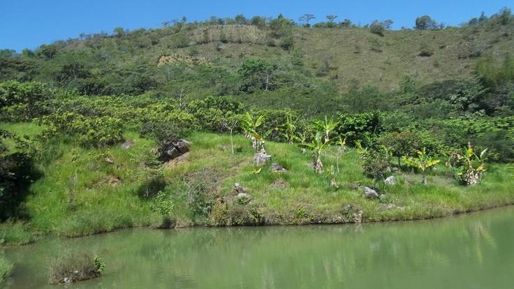 Lago de pesca, hermosa vista que tranquiliza el alma