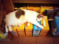 Join WNYC's Bodega Cat Bracket to find the best bodega cat. Hint: all cats are the best cats