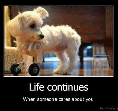life just needs love and care<3: That, Heart, Little Puppies, Quote, Pet, Life Continuing, True Stories, Little Dogs, Animal