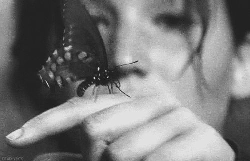 animation black and white life butterfly muves