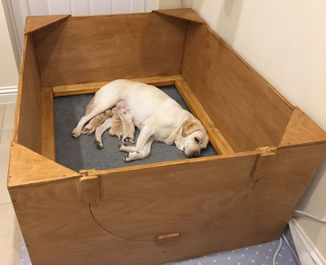 the 25 best whelping box ideas on pinterest dog