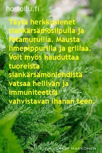 via hortoilu.fi