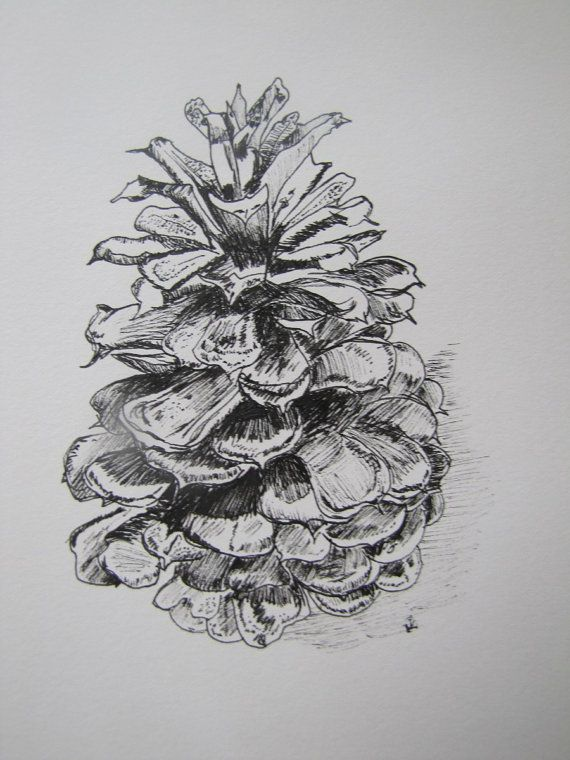original pen and ink still life pine cone by My Imagination In Ink