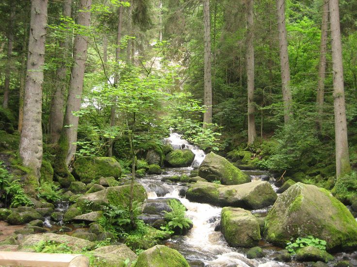 The Black Forest is a wooded mountain range in Baden-Württemberg, southwestern Germany. It is bordered by the Rhine valley to the west and south. The highest peak is the Feldberg with an elevation of 1,493 metres (4,898 ft).