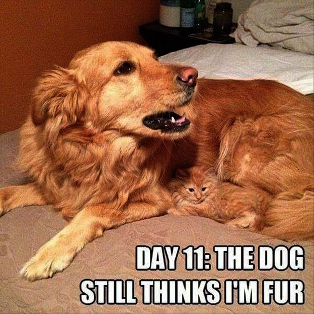 Ahhh I Love Cats And Kittens Book Scholastic Cat And Dog Memes Funny Cat Memes Funny Animals