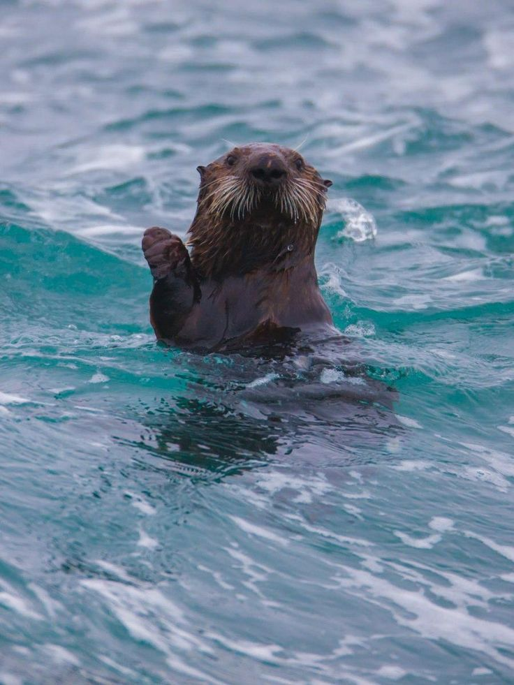 Ben enjoying a swim. It's good to see him taking some time to relax!