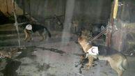 راه ورود به زیر آوار باز شد   13 سگ زنده یاب وارد زیرزمین شدند