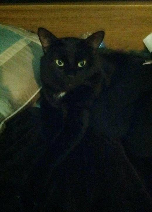 LOST: black cat in #Balzac area.  Pls RT share to help locate this kitty. YYC Pet Recovery shared Adam Dykens's post. Missing cat in Balzac area 2017-12-11T00:36:02.000Z by  YYC Pet Recovery http://ift.tt/2BxeW3I