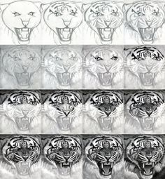 How to Draw A Realistic Tiger, honestly, I could only do the first row without…