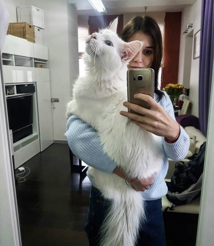 Kitty Grows Up Hugging His Human Every Day, Won't Stop Even After Becoming A GIANT