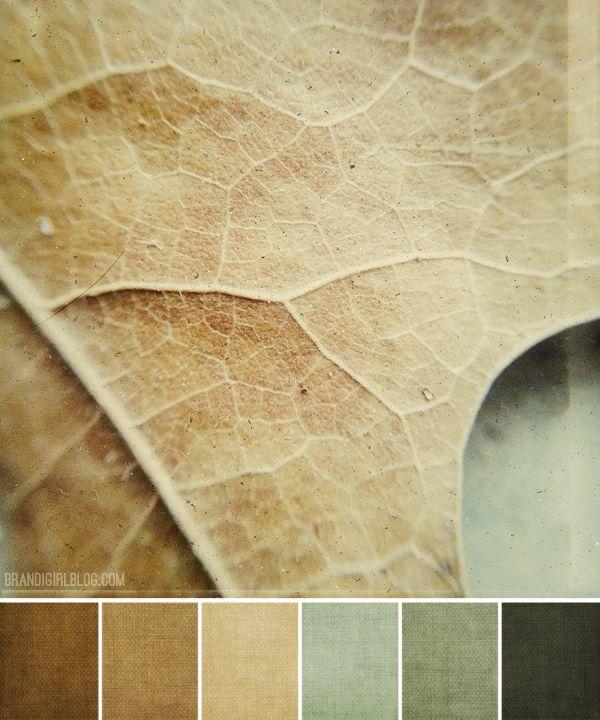 Paleta de colores siguiendo las hojas caídas de los árboles en otoño. ¡Prepara tu look y tu maquillaje! Por Brandi Hussey (en Pinterest brandihussey) #colores #pantone #moda