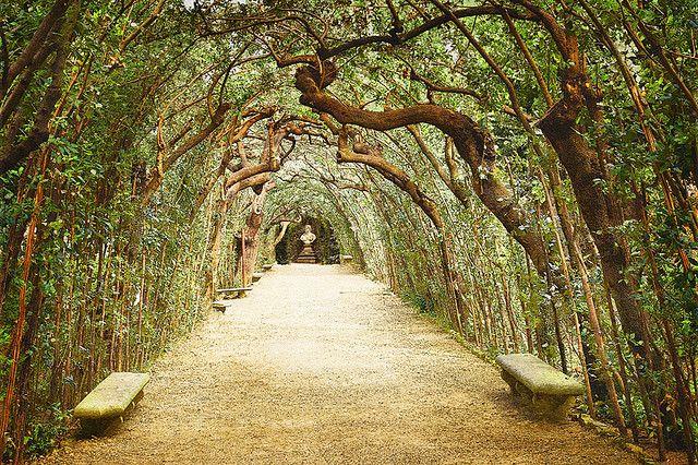 Boboli Gardens Tree Arbor - Florence, Italy