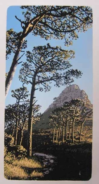 long pines by Joshua Miles  Pines on Table Mountain above Cape Town