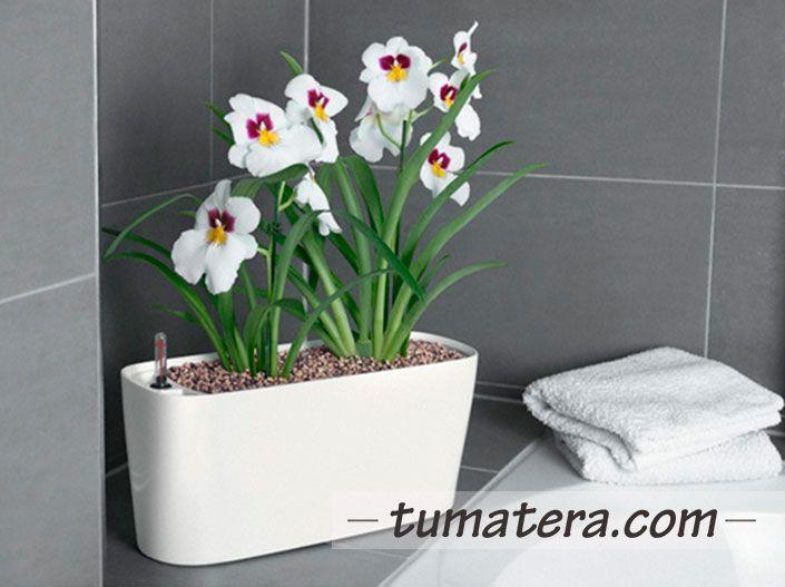 Elegancia, funcionalidad y diseño combinado en una pequeña jardinera. Encuentralas en: http://www.tumatera.co/products/matera-inteligente-06-mi-401518delta20/