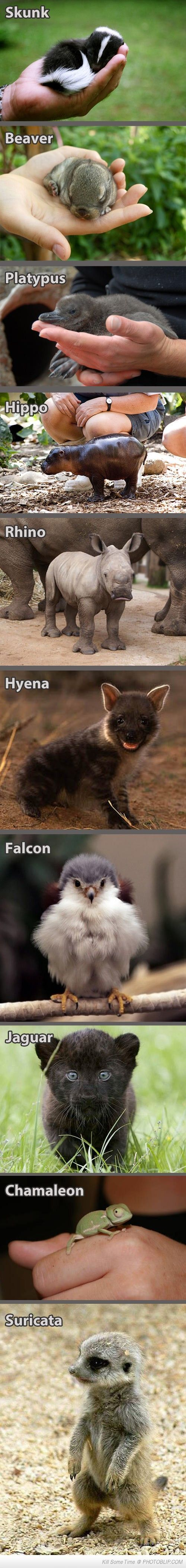 The baby falcon and baby chameleon made me laugh! Cuteness overload!!