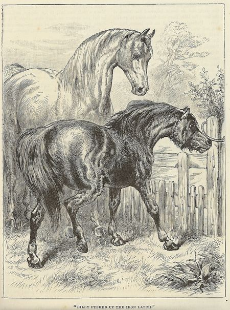 Paper topic relating to horses?