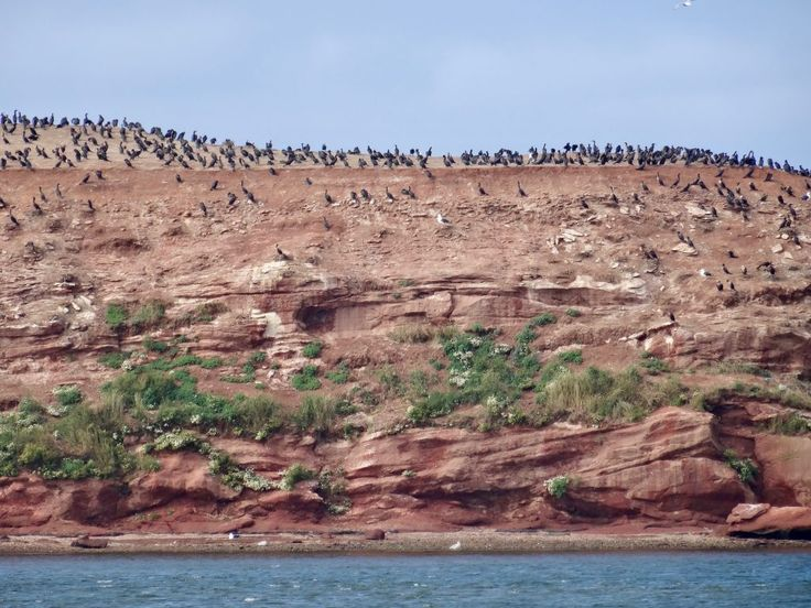 Birds on a red rock in the Magdalen islands