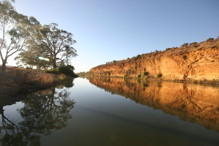 On the Murray River, South Australia.