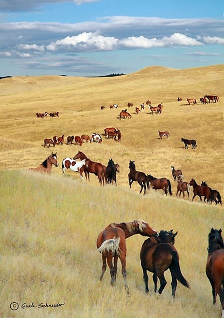 Field of horses! Just plain awesome!