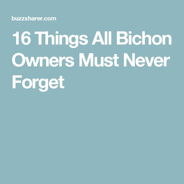 16 Things All Bichon Owners Must Never Forget