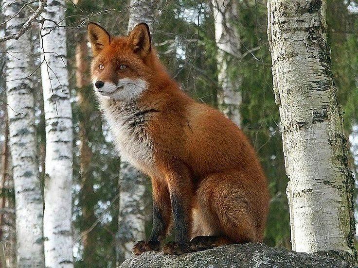 район животные леса удмуртии фото кто