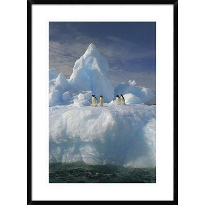 Global Gallery 'Adelie Penguin Group Rest on Iceberg' Framed Photographic Print