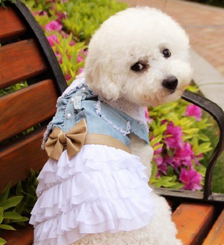 40 Best Images About Cute Girl Dog Clothes
