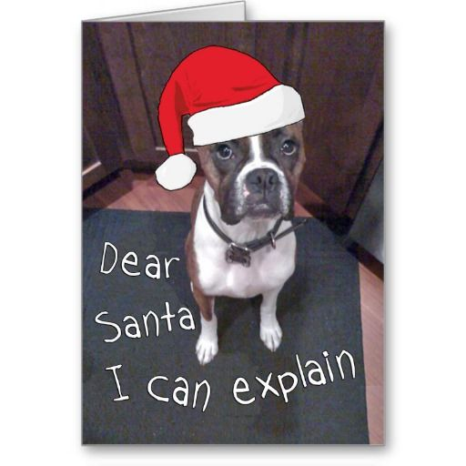 Funny Boxer Dog Christmas Card - Use this link for coupon codes: https://www.zazzle.com/coupons?rf=238077998797672559 (big sale today - 12/16/2013)