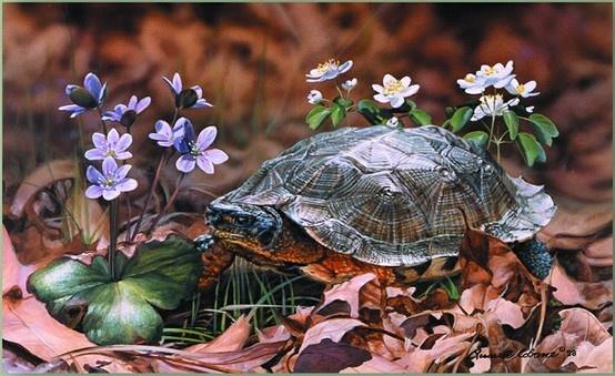 Art of Russell CobaneArt Gallery, Coban Art, Animal Art, Animal Drawing, Russell Coban, Animal Totems, Wood Turtles, Art Gettin, Coban Studios