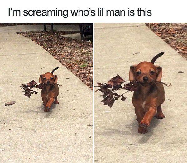Dogs are a meme's best friend – 30 Pics