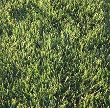 Zoysia grass for Texas
