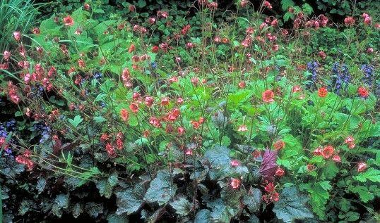 garten-groene.de :: Garten Gröne :: rote Blätter - rote Blüten :: de