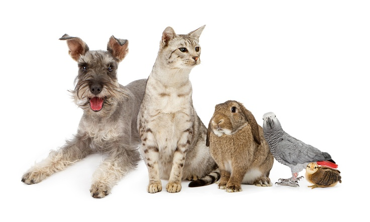 Group of Domestic Pets With Dog, Cat Rabbit and Birds
