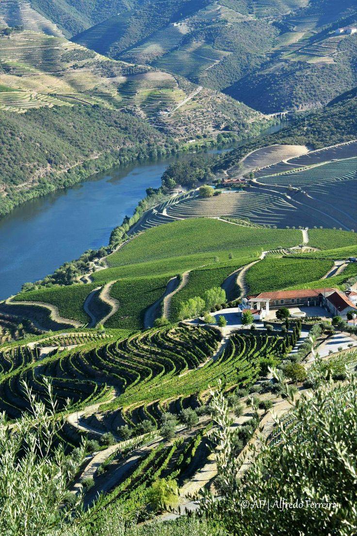 Qta. De Ventozelo Ervedosa do Douro