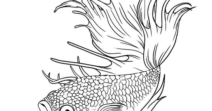 Paling Bagus 26 Tato Ikan Hiu Gambar Lukisan Ikan Hitam Putih Cikimm Com Ini Arti Tato Hiu Putih Di Tubuh Young Lex Seleb Tempo Co Do Tato Seni Ikan Gambar