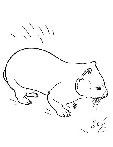 Printable Wombat Coloring Page Free PDF Download At Coloringcafe